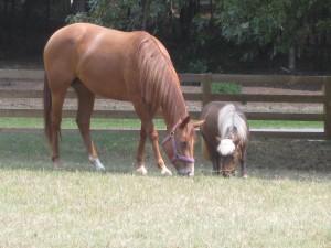 Horses on Dr. Stevens property